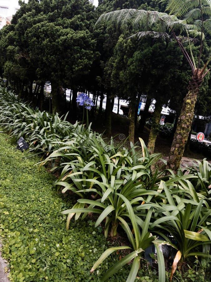 Genting高地庭院 免版税库存照片