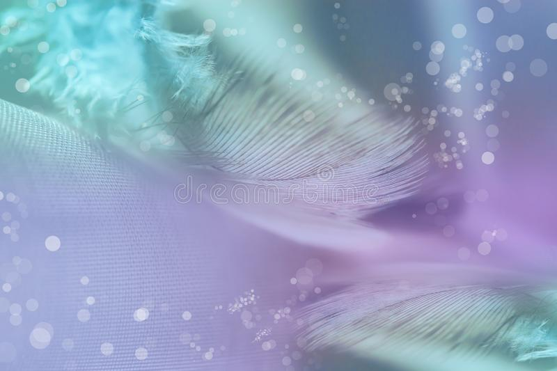 Gentle abstract background. Grey bird feathers on light blue and lilac background royalty free stock images