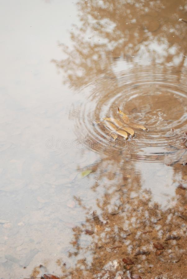 Download A Gentle Beige Rain Puddle With Rings Stock Photo - Image of fall, trees: 22570034