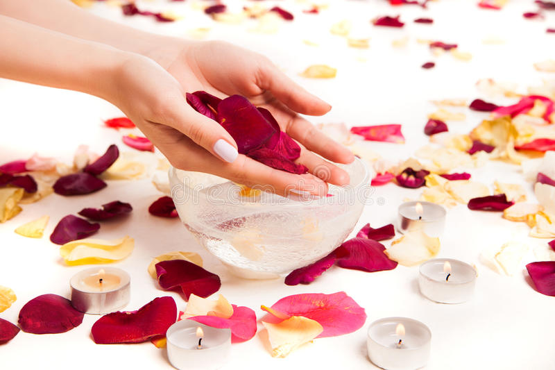 Gentle female hands holding rose petals. Cropped close up tender female hands holding rose petals above bowl surrounded with more rose petals stock images