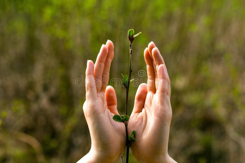 Gentle female hands hug a small plant sprout stock photos