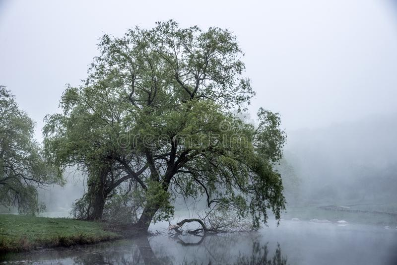 Gentle fog rolls over a Massachusetts pond and brushes the leaves of a large tree leaning towards the water royalty free stock photography