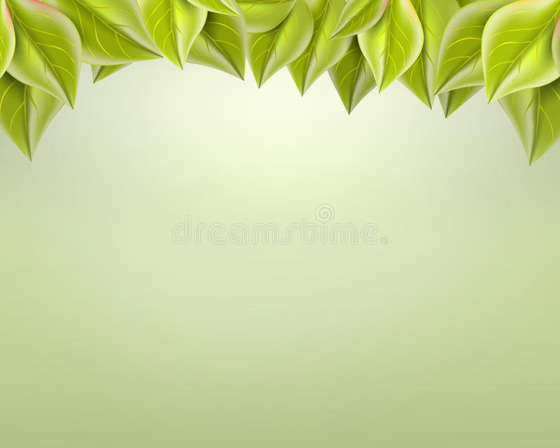 Gentle green leaves on a light background, stock photos