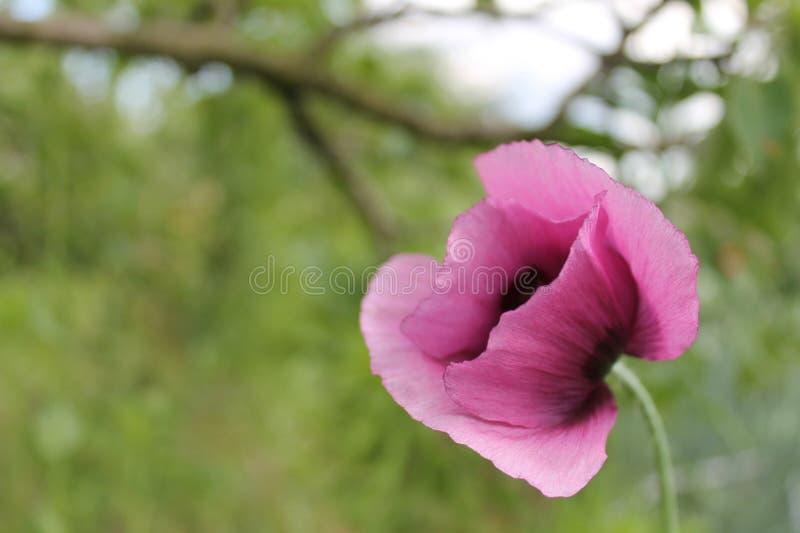 Gentle pink flower pleasing eye stock photography
