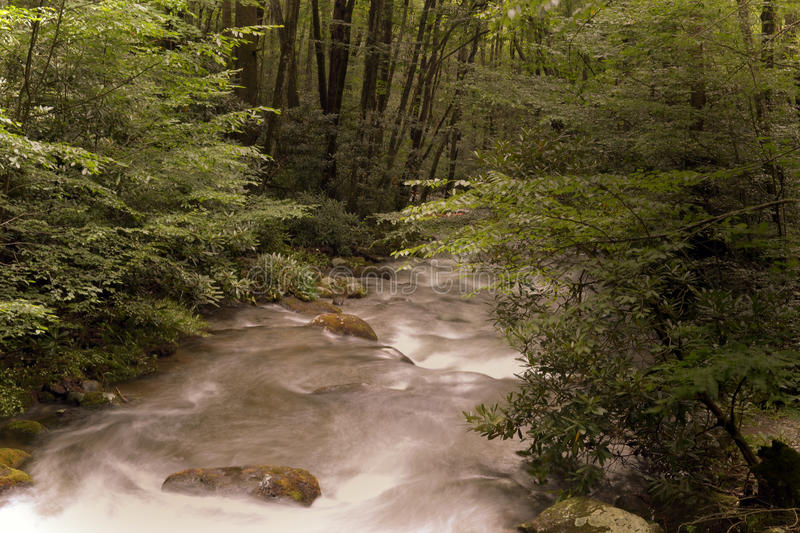 Gentle River royalty free stock image
