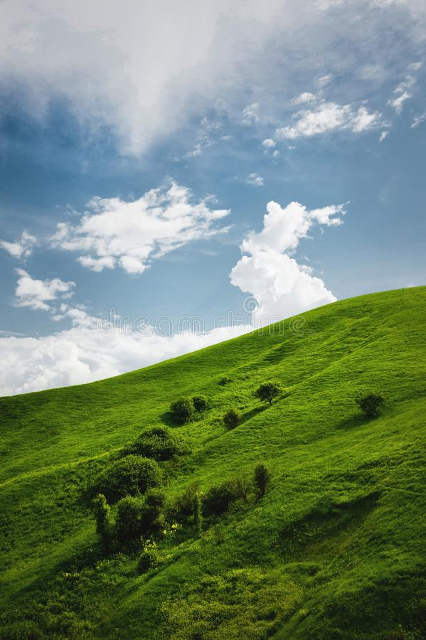 A gentle slope of a green hill with rare trees and lush grass against a blue sky with clouds. The Sonoma Valley stock image