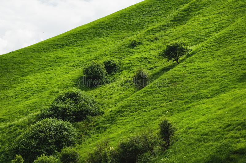 A gentle slope of a green hill with rare trees and lush grass against a blue sky with clouds. The Sonoma Valley royalty free stock photography