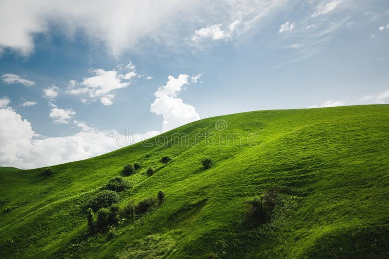 A gentle slope of a green hill with rare trees and lush grass against a blue sky with clouds. The Sonoma Valley stock photo
