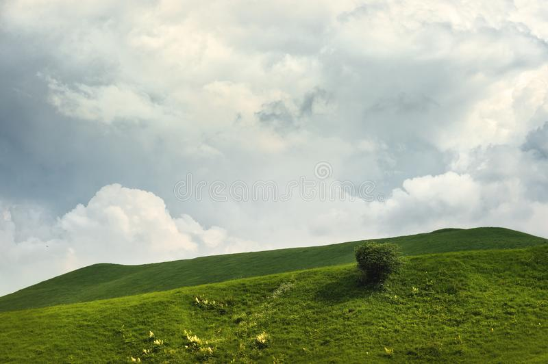 A gentle slope of a green hill with rare trees and lush grass against a blue sky with clouds. The Sonoma Valley royalty free stock photo