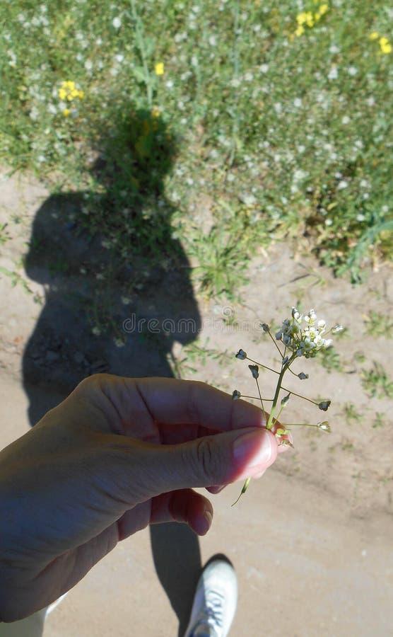 Gentle white wild flower in hand girl shadow people road rural background. Gentle white wild flower hand girl shadow people road rural   flowers black background stock photo