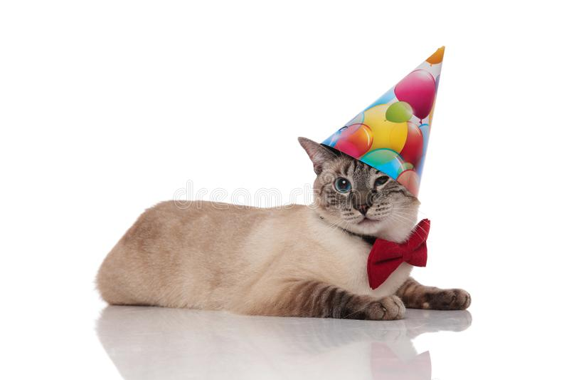 Gentleman burmese cat lying and wearing a birthday hat. Gentleman burmese cat lying on white background and wearing a birthday hat stock photography