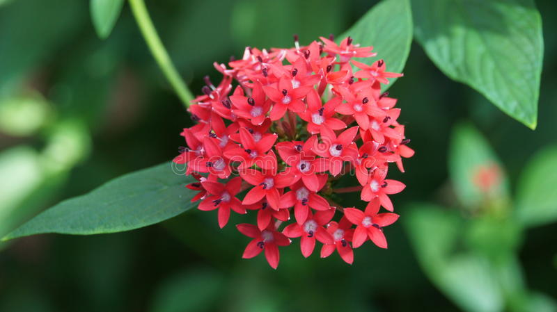 Gently red flower, vegetation, petals, nature, beautiful stock photography
