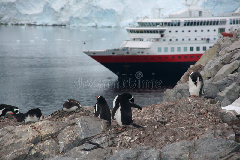 Gentoo penguin rookery with cruise ship stock images