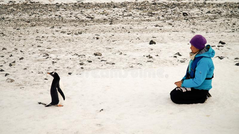 Gentoo penguins meeting people in Antarctica on Cuverville Island. stock photos