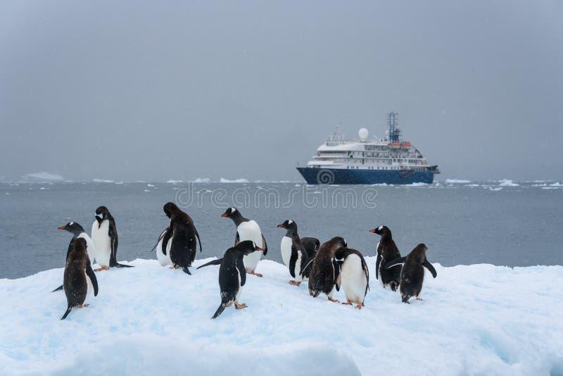 Gentoo-Pinguine, die auf einen Eisberg mit Kreuzschiff im Hintergrund, Paradise-Bucht, die Antarktis schwimmen lizenzfreie stockfotografie