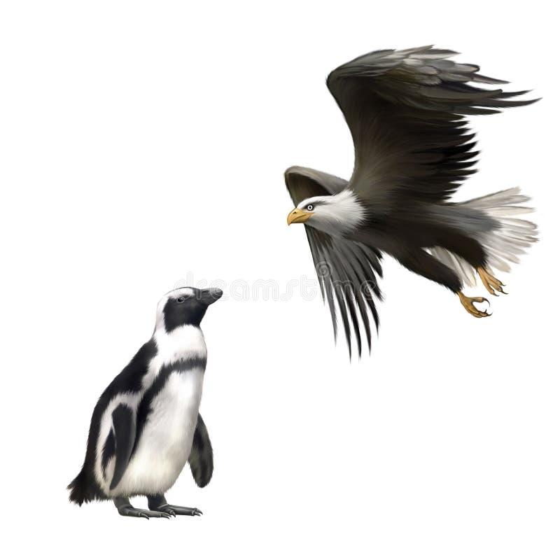 Gentoo pingvin, amerikansk skallig örn i flykten royaltyfri illustrationer