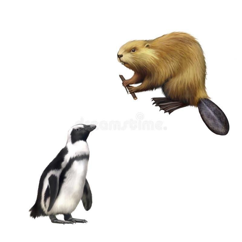 Gentoo pingvin som är norr - amerikansk bäver som gnag på stock illustrationer