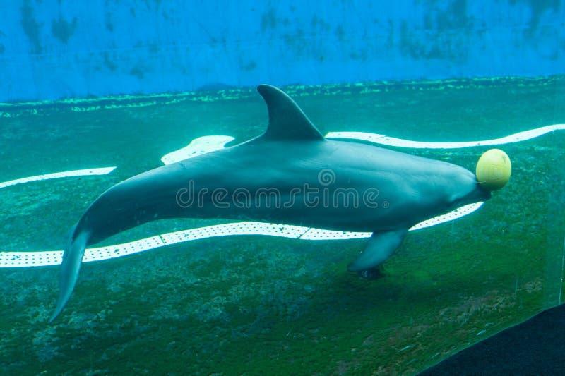 Genua, acquario, nuova vasca dei delfini costruita DA Renzo Piano stockbilder