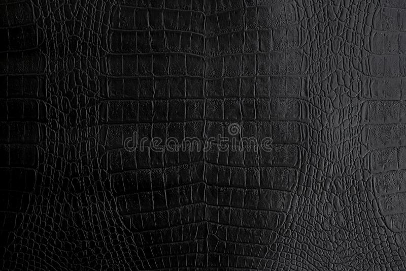 Genuine black Crocodile leather background in dark tone beautiful stock photography