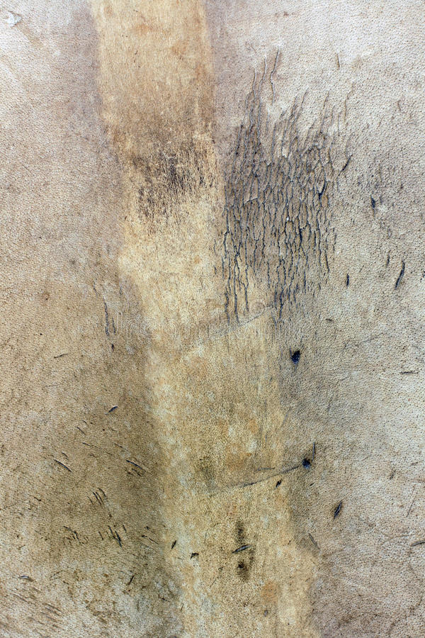 Genuine leather texture royalty free stock photography