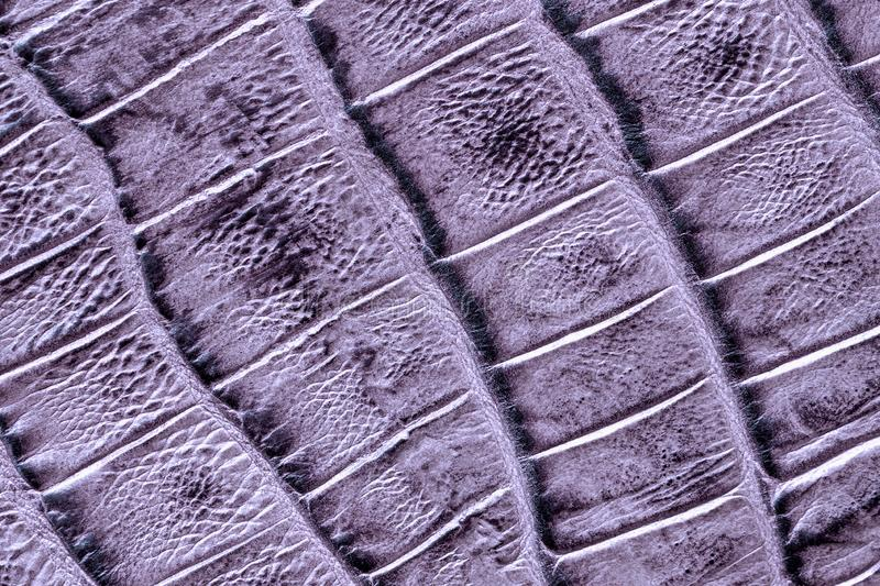 Genuine leather texture with imitation of exotic reptile, light violet matte surface, trendy background stock photography
