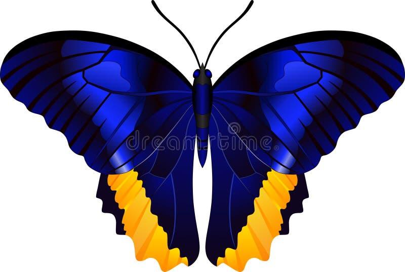 Genus Caligo butterfly  vector image royalty free illustration