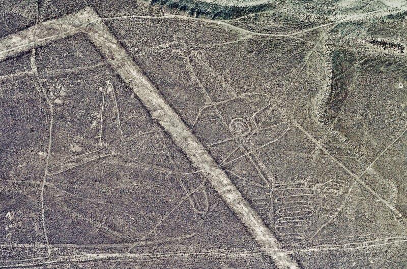 Geoglyphs και γραμμές στην έρημο Nazca Περού στοκ εικόνα με δικαίωμα ελεύθερης χρήσης