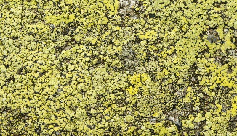 Geographicum de Rhizocarpon de lichen de carte sur la roche image stock