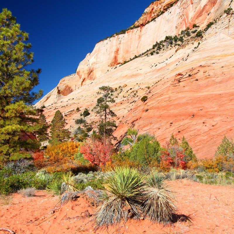 geologii park narodowy zion zdjęcia royalty free