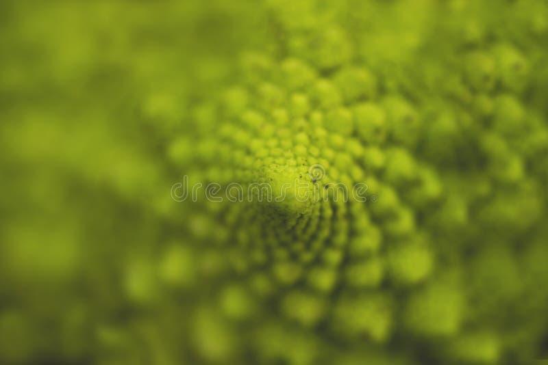 Geometria sagrado em brócolis do romanesco foto de stock
