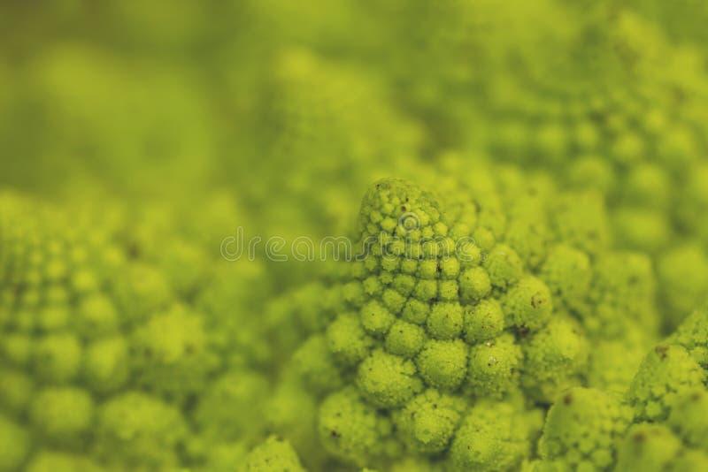 Geometria sagrado em brócolis do romanesco imagem de stock royalty free