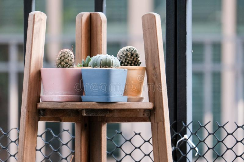 Geometric glass florarium vase with succulent plants and small cacti in a pots on wooden rack. Small garden with miniature cactuse royalty free stock photo