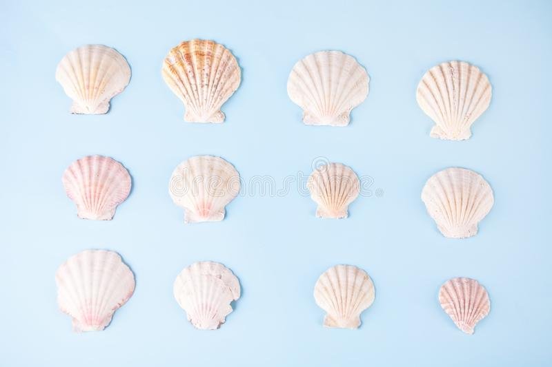 Geometric pattern from rows of seashells of same shapes and colors on blue background. Minimalist style. Creative poster card. stock image