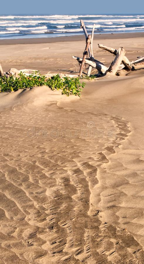 Sandy beach with drift wood and plants royalty free stock image