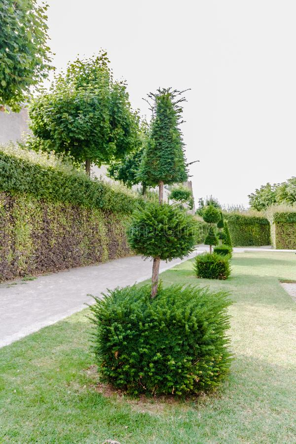 Geometric plant forms of landscape design. Trees trimmed as Geometric shapes. Beautiful garden Topiary art landscape. Green trimmed trees in the form of stock images