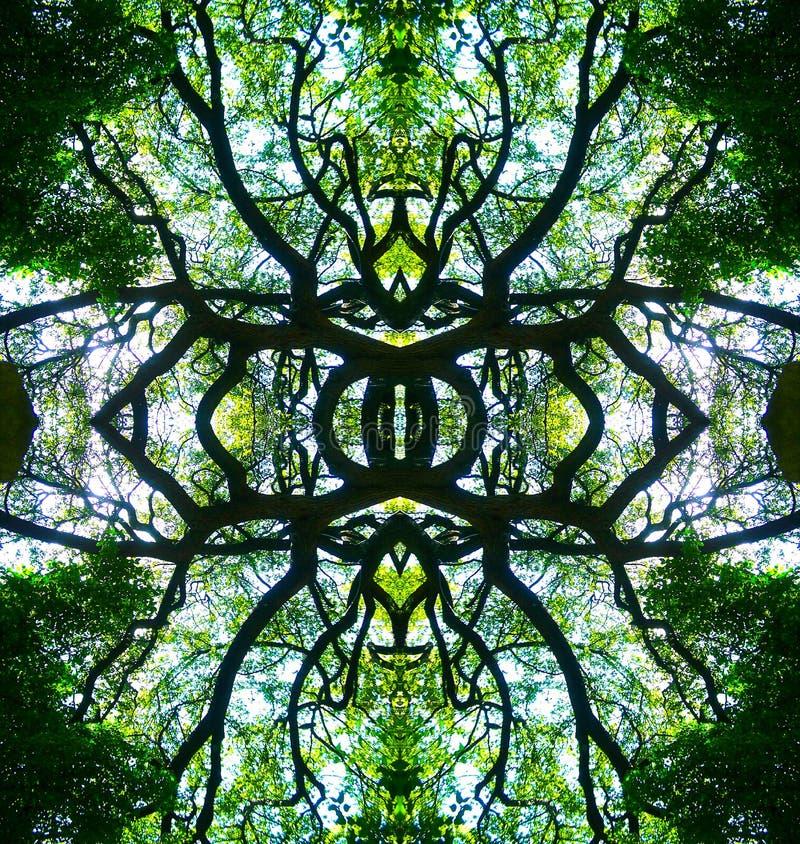 Kaleidescope tree design. Geometric symmetric kaleidoscope tree design of the tree at the alamo, san antonio, texas summer symmetry pattern graphic nature green stock image