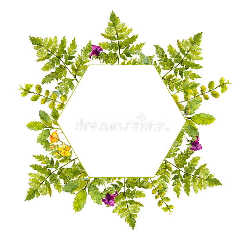 Geometrii rama z malować akwareli zielonymi roślinami dzikimi kwiatami i Natura inspirująca granica dla naturalnych kosmetyków ilustracja wektor