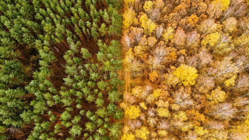 Geometry in Autumn royalty free stock images