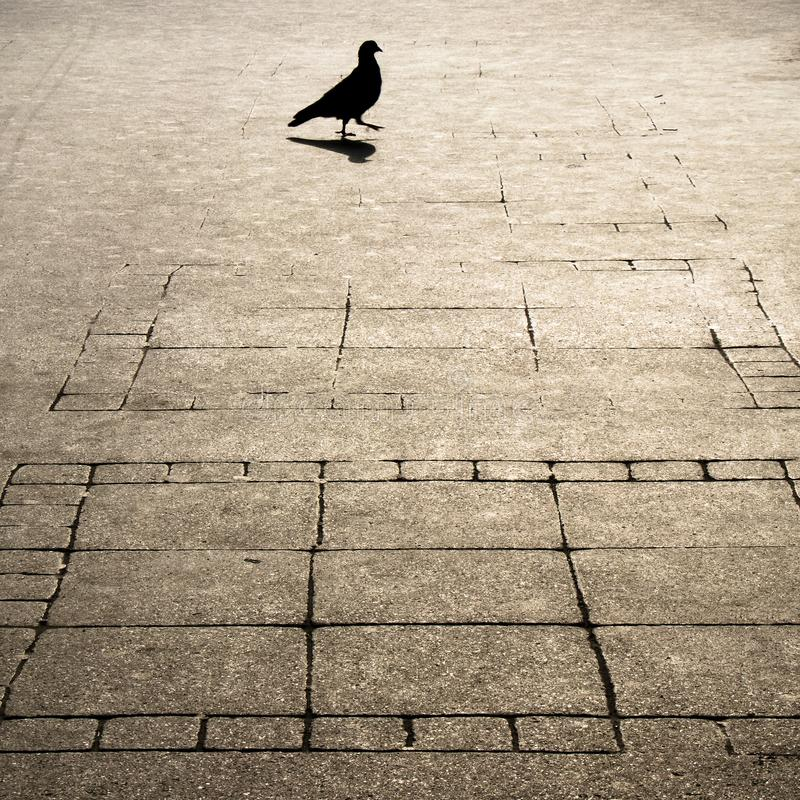 Geometry patterned city sidewalk and one pegeon silhouette shadow stock photography