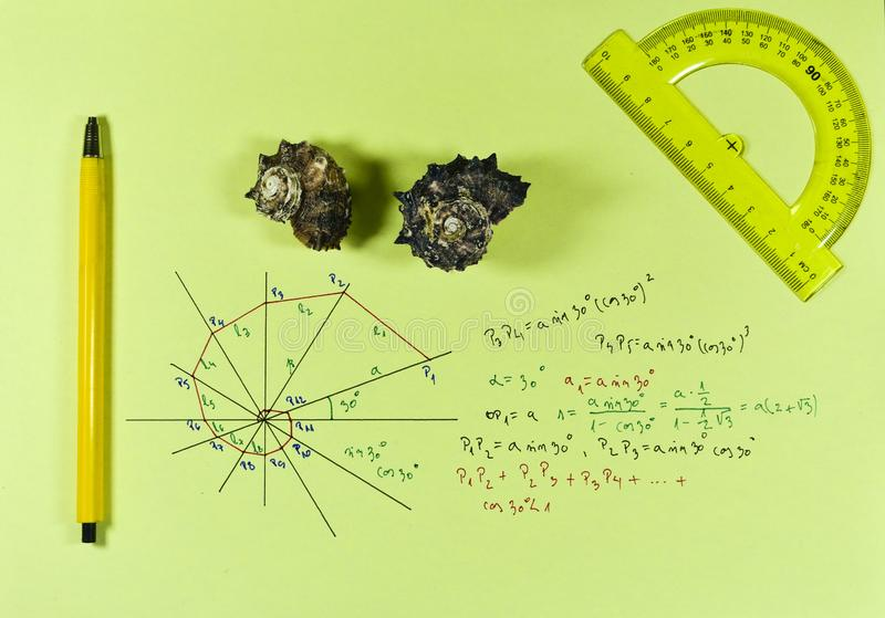 Geometry of a shell with pen and ruler. Two shells with ruler and pen, mathematical geometric series and formulas of the shape of the shell stock photo