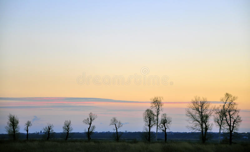 Geometry at sunset. Geometry trees at sunset time royalty free stock image
