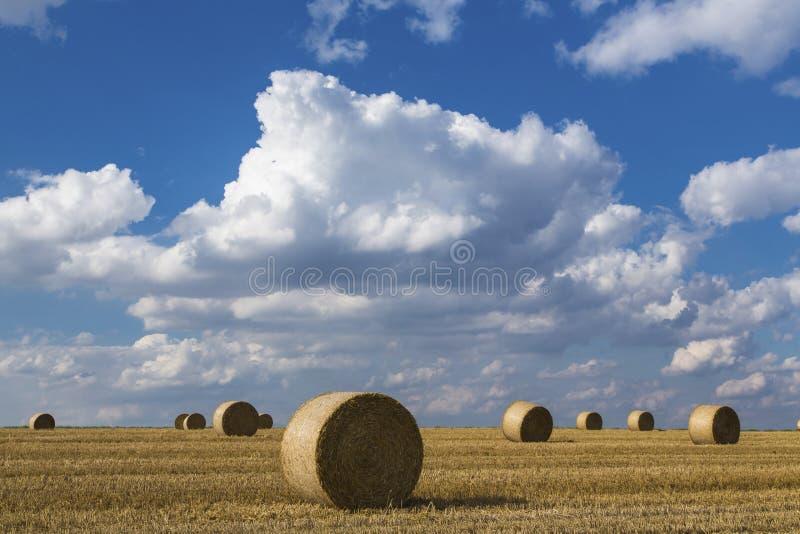 Download Geoogst gewassengebied stock foto. Afbeelding bestaande uit borgtocht - 39110960