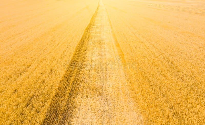 Geoogste tarwe in het veld bij zonsondergang en het spoor van de combinatie in de herfst in Rusland bovenaanzicht van het veld na stock afbeeldingen