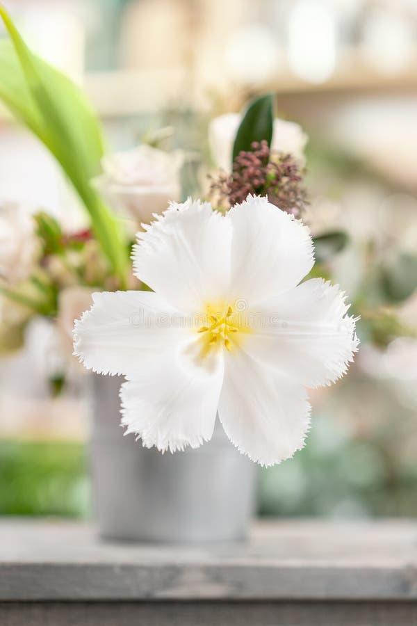 Geopende knop van ongebruikelijke witte tulp Bloem met omzoomd op natuurlijk gebladerte groene achtergrond De stemming van de len royalty-vrije stock afbeeldingen