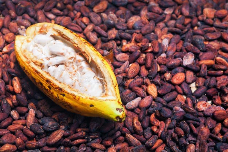 Geopende rijpe cacaopeul bij het drogen van ruwe bonenachtergrond royalty-vrije stock foto's