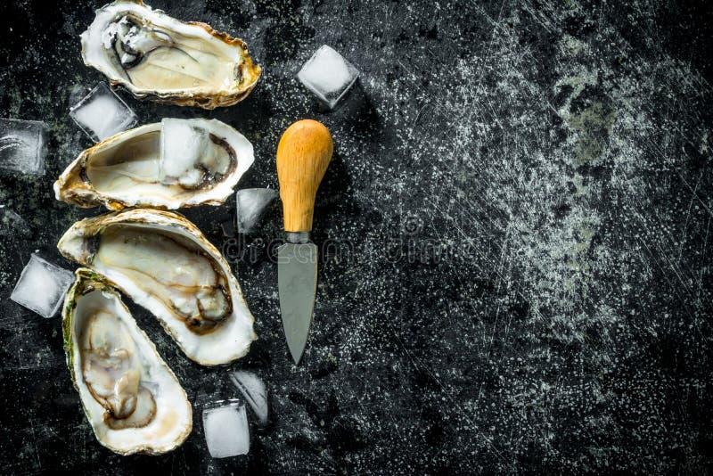 Geopende ruwe oesters met ijsblokjes en mes stock afbeelding