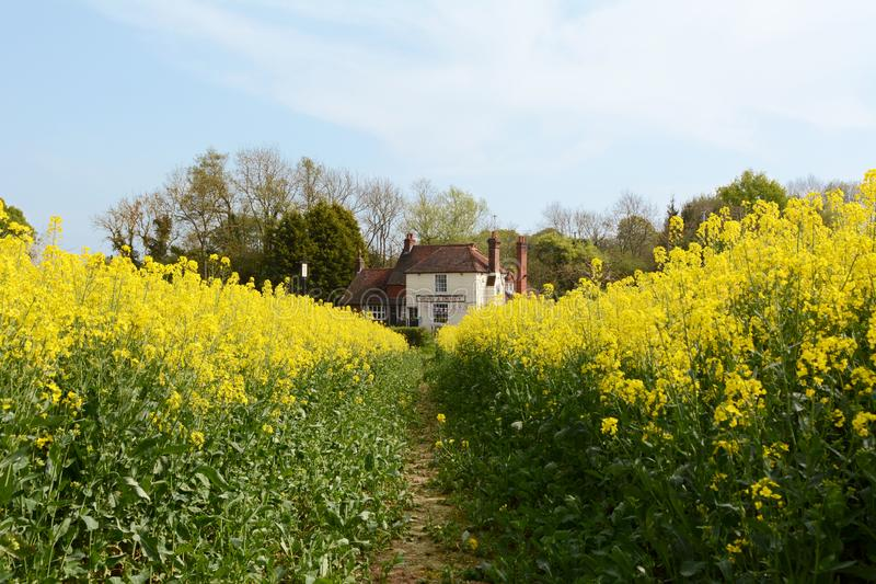 George och drakebar i Kent utöver ett lantgårdfält royaltyfri bild