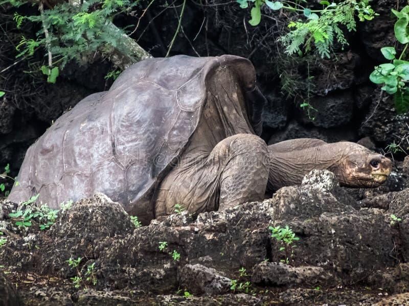 George seul chez Galapagos photographie stock libre de droits