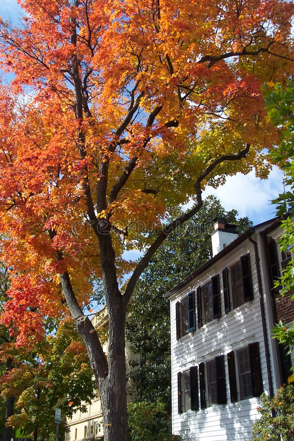 Download Georgetown jesieni obraz stock. Obraz złożonej z domy, georgette - 35299