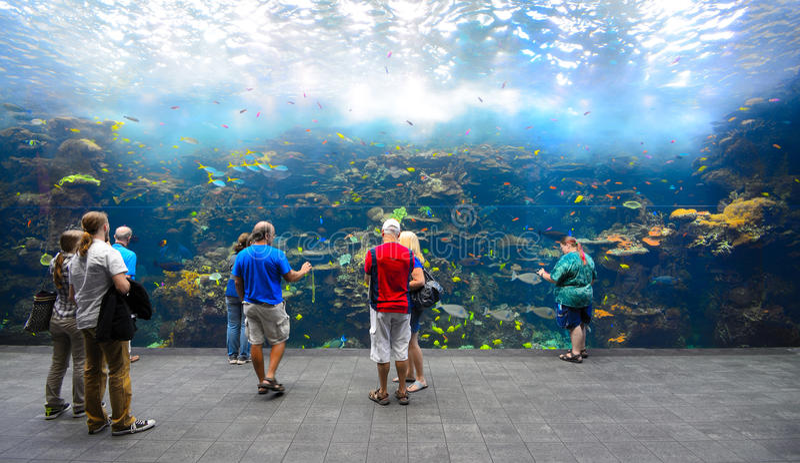 Georgia Aquarium. Ocean Explorer exhibit at Georgia Aquarium, the largest aquarium in the world. In Atlanta, Georgia
